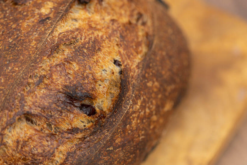 the deeply caramelized crust of this cranberry walnut sourdough bread
